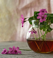 Чаша утринен чай - 2; comments:1