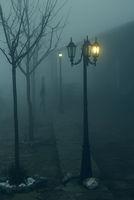 Сенки в нощта; comments:20