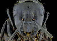 Мравка; comments:2