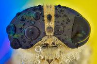 конска муха; comments:2