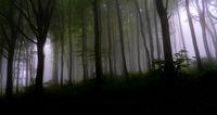 Мъгла в гората2; comments:6