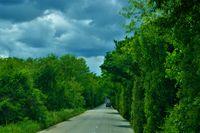 Страшната гора; comments:6
