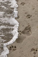 морето, човекът и кучето ...; comments:1