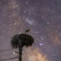 Нощна стража; comments:9