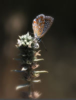 no name ( ID=2305701 ); comments:4
