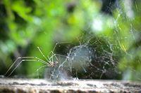 паяк плете своята паяжина; comments:3