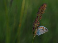 Пеперуда; comments:14