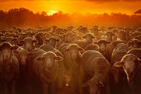 Залез над фермата; comments:30