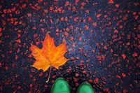 И идва есента...