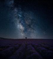 Lavender; comments:4