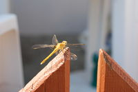 no name ( ID=2307133 ); comments:5