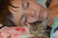 Сънят на децата; No comments