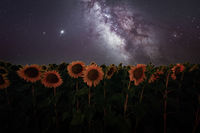 Слънчогледите и млечният път.; comments:6