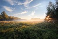 утро в лесу; comments:2