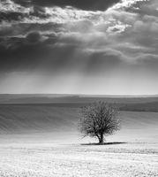 Самота...; comments:11