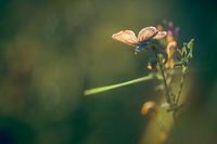 Поредната снимка с пеперудка; comments:3