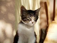 no name ( ID=2314113 ); comments:3