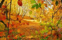 Златна Есен; comments:4