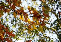 есен; comments:3