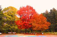 Есенно; comments:9