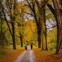 Есенна разходка; comments:8