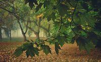 Есен; comments:7