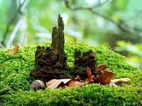 Замък в гората... :); comments:9