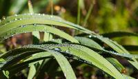 След дъжда; comments:1