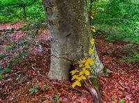 Между лятото и есента; comments:2