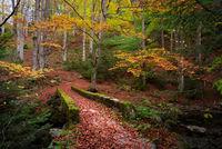 Есенна палитра; comments:6