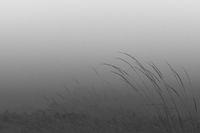 Утринна мъгла; comments:5