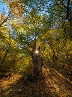 Есента в целия си блясък; comments:3