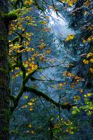 есен...; comments:14