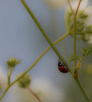 no name ( ID=2322231 ); comments:6