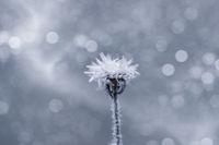 Deep-freezing; comments:1