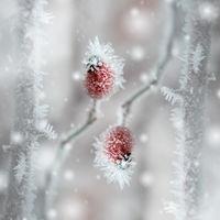 Deep-freezing II; comments:19
