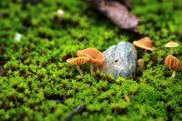 ......в тайнственната гора......; comments:4