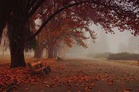 Есен в парка; comments:17
