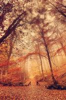 есенна ... Витоша; comments:7