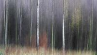 Брезова гора абстракт; comments:8