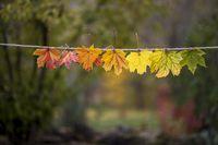 Есенни листа(цветя).; Коментари:4