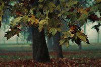 Есенно цветно настроение; comments:16