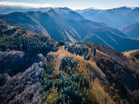 Из смесените гори на Родопите; comments:6
