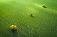 Зелена Есен; comments:9