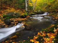 ,,Есента рисува''; Коментари:14