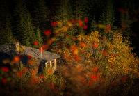 Прегръдката на есента; comments:4