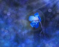 Blue Dream; comments:6