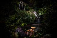 Българската джунгла - Крушунски водопади; No comments