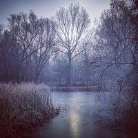 Зимно от парка; comments:4