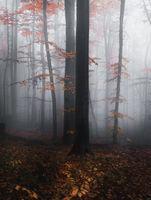 Един кадър от есента тази година на Витоша.; comments:5